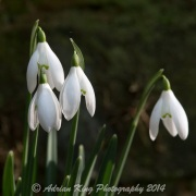 20150215_(Kingston Lacy)_13108