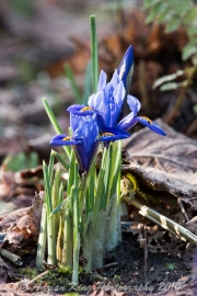 20150215_(Kingston Lacy)_13198