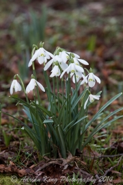20150215_(Kingston Lacy)_13241